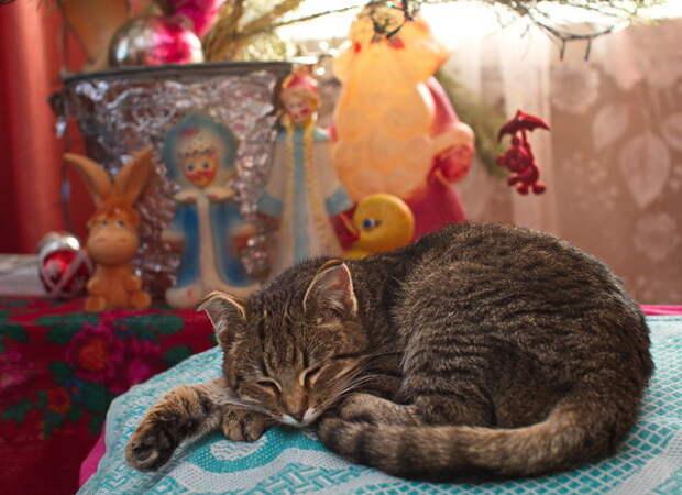 Деревня Расташевка деревня, животные, история, коты