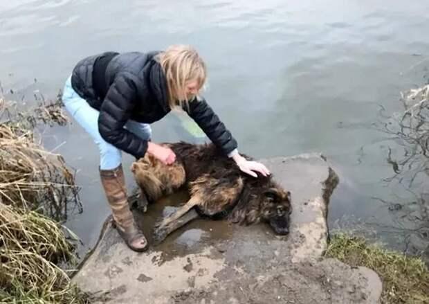 Старого пса пытались утопить, но ему повезло