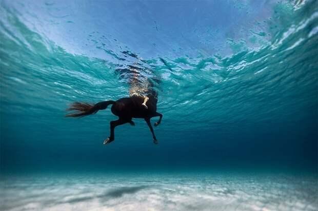 Потрясающие подводные фотографии