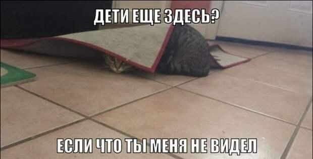 Подражая котоматрице котоматрица, коты, юмор