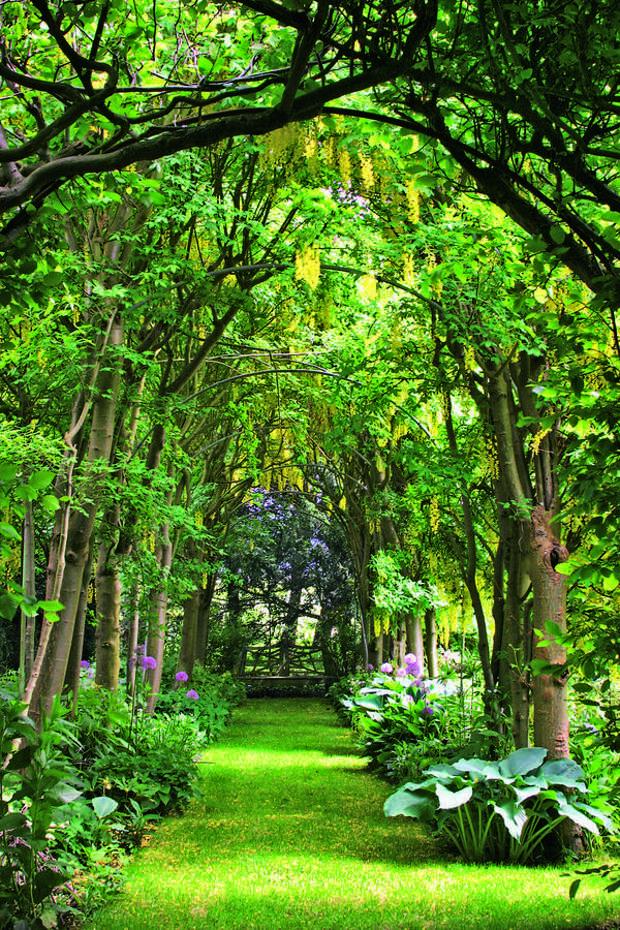 Гармония лесного ландшафта