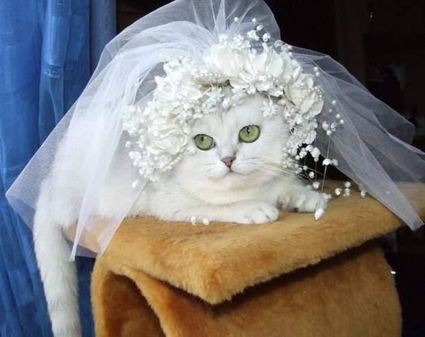 31 причина - почему надо обменять жену на кошку