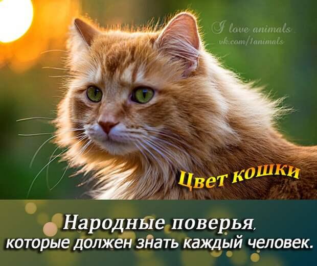 Цвет кошки - народные поверья