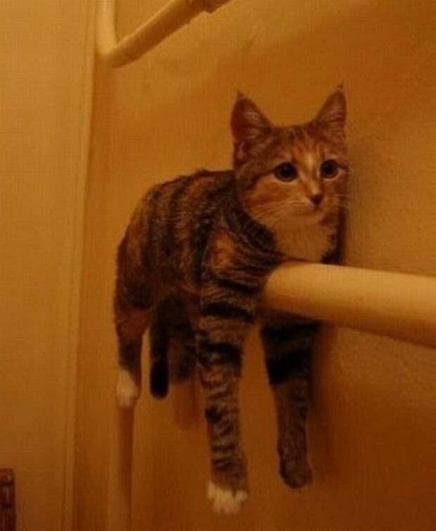 Позитивные фотографии с котами коты, позитив