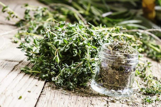 Трава тимьяна обладает множеством полезных свойств