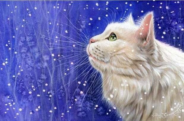 белый кот на голубом фоне (700x459, 87Kb)
