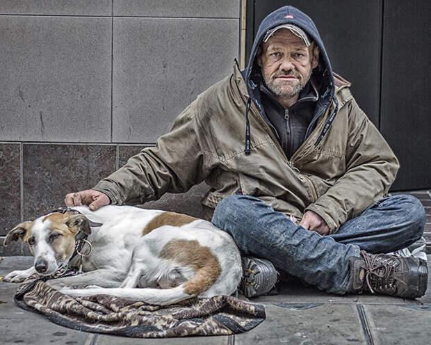 33.  бездомный, любовь, собака