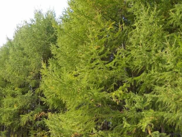 Не только потепление, но и вырубка леса: почему тает вечная мерзлота в Якутии