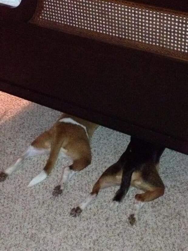 Собачки которые очень хотели спрятаться-7