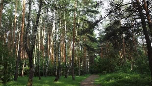 Свыше 10 га земель лесного фонда области освободили от самозахвата в 2018 г