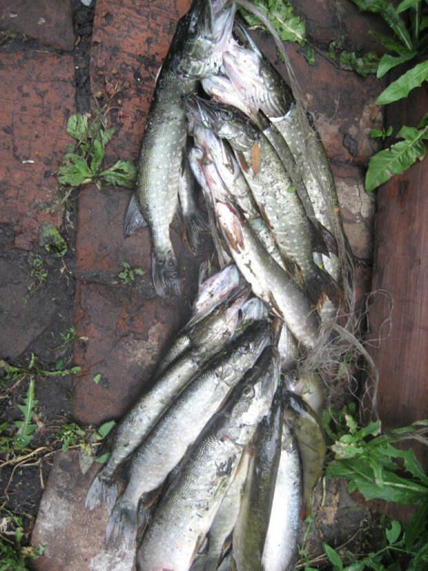 В России изменились правила рыбной ловли