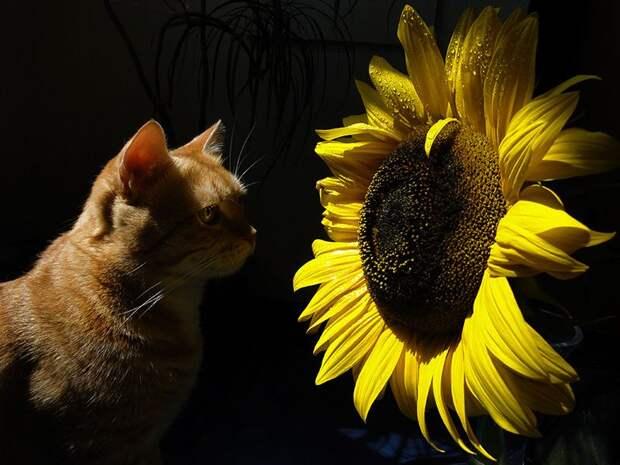 NewPix.ru - Кошки и притягательные ароматы цветов