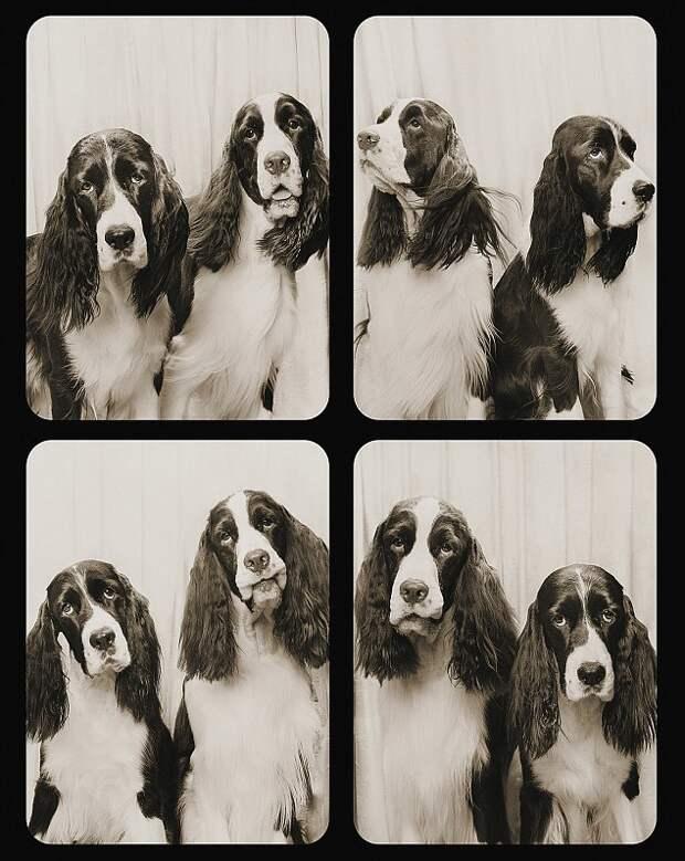 Забавные собаки