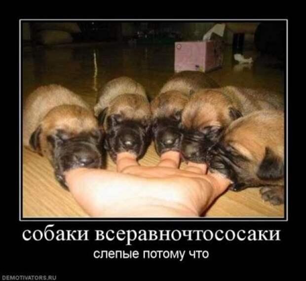 СОбака улыбака, собака силуволидержака, собака всёништяка и другие ... | 570x620