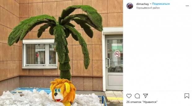 Фото дня: в Хорошевке появилась пальма