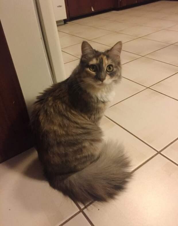 Очаровательный котенок сам выбрал себе хозяина и попросился в его дом