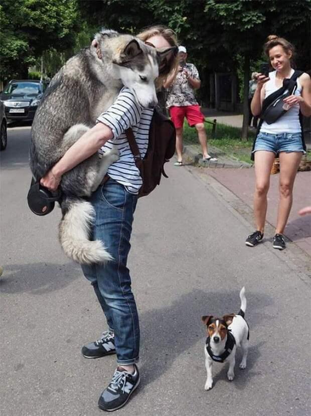 10 собак, которым вдруг стало очень страшно!