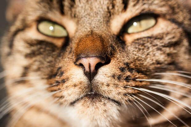 Поверхность кошачьего носа можно сравнить с отпечатками пальцев человека. Рисунок поверхности у каждого уникален. (Jonas Schmid)