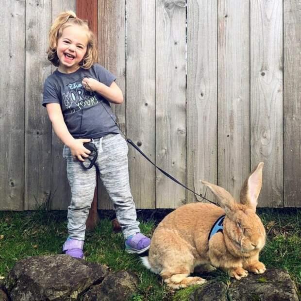 Лучший друг для маленького ребенка — неправильный кролик
