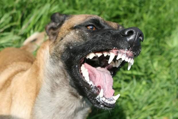 Соседка рассказала о хозяйке питомника, где собаки загрызли мальчика