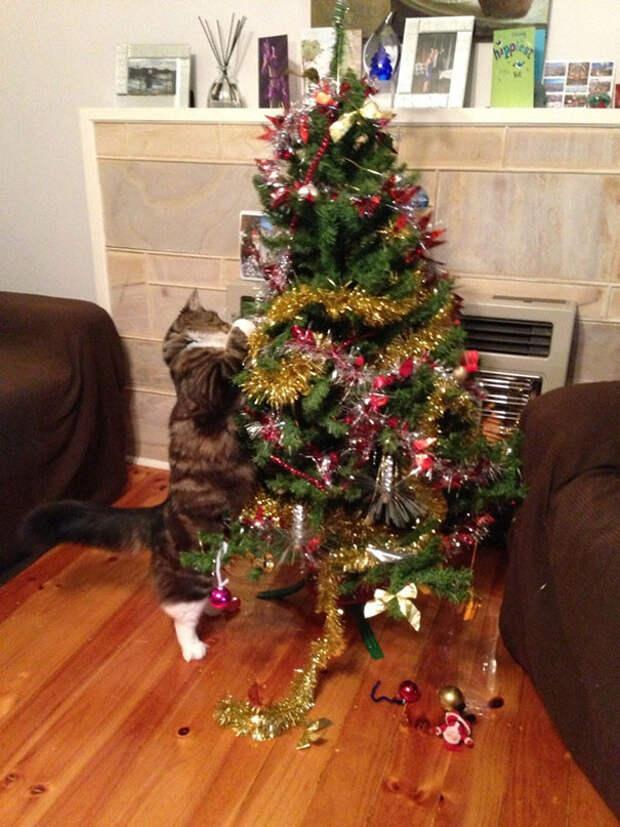 15. Помогает разбирать елку елка, кошка, подборка