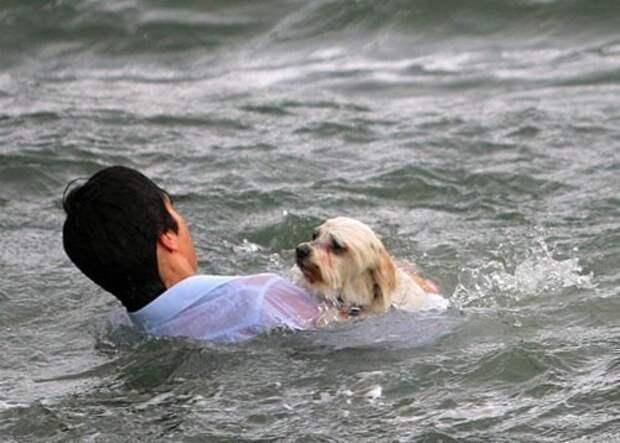 собака, спасение, добро, герой