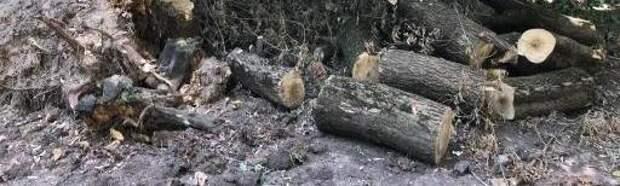 Спиленные ветви деревьев вывезли с улицы Искры