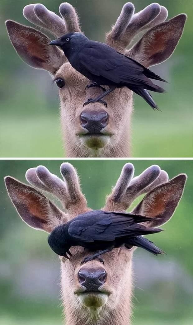 Эти забавные животные животные, прикол, юмор