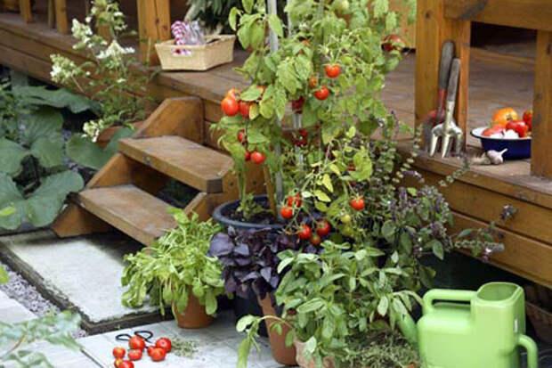 Полезные советы для садоводов-огородников