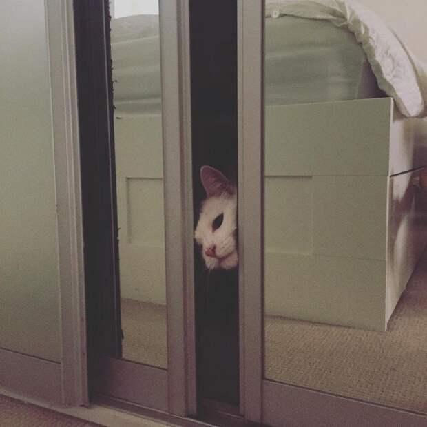 """2. Бегаешь по дому, причитая """"ты только посмотриииии на него!"""" каждый раз, когда кот делает что-то милое домашний питомец, животные, кот, прикол, юмор"""