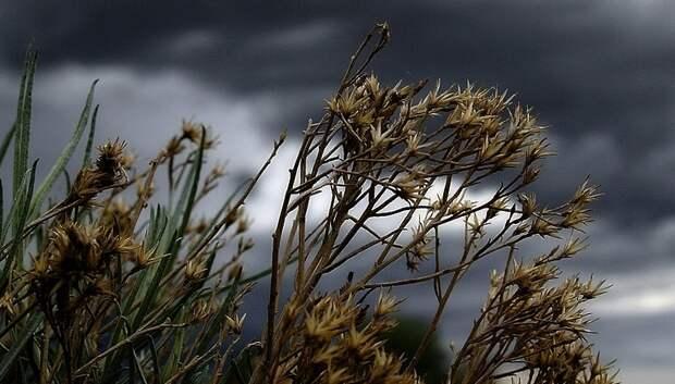 «Желтый» уровень опасности из‑за ветра и грозы объявили в регионе на 25–26 мая