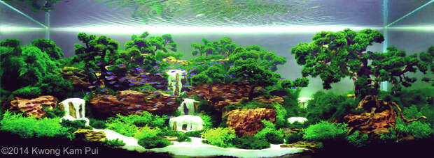 Красота аквариумных пейзажей