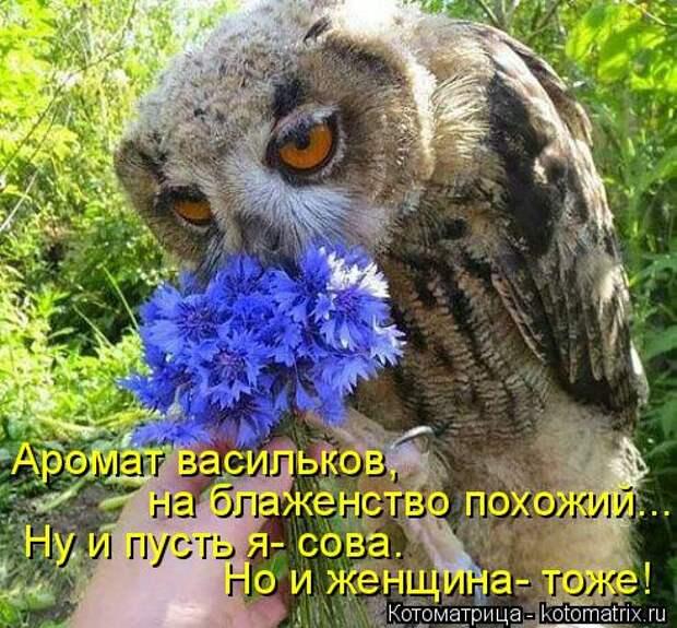 Котоматрица: Но и женщина- тоже! Ну и пусть я- сова. Аромат васильков,   на блаженство похожий...