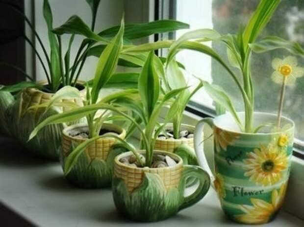 0 растений, которые принесут в ваш дом любовь
