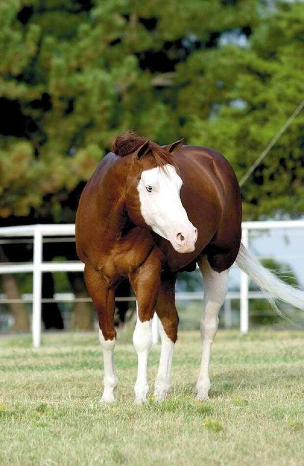 Еще одна лошадь в маске животные, красота, лошади