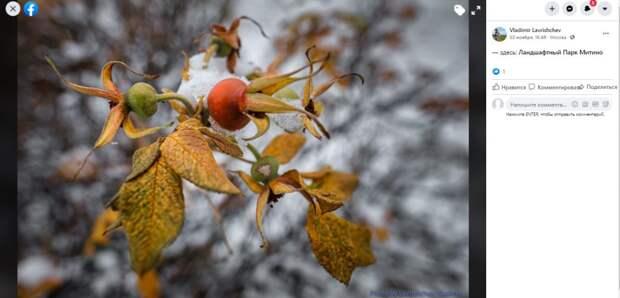 Фото дня: зима против осени в Ландшафтном парке
