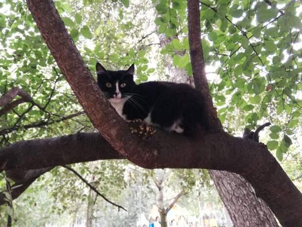 Кошка уютно устроилась на дереве в Отрадном