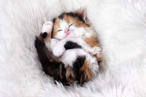 6. Сладкие сны котенок, сон