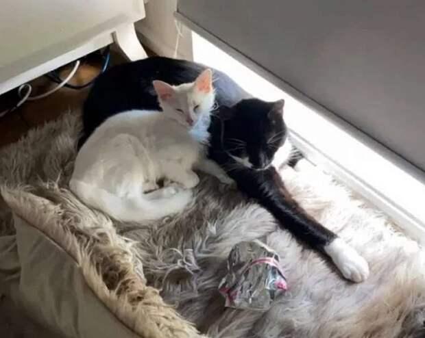 Как котенок, привязавшись к домашнему коту, перестал быть бездомным