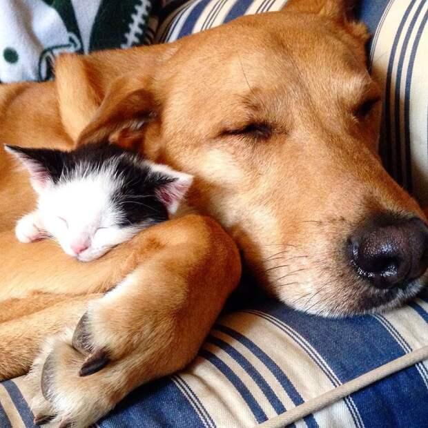 Женщина спасла собаку от усыпления, а она стала «мамой» для её котят