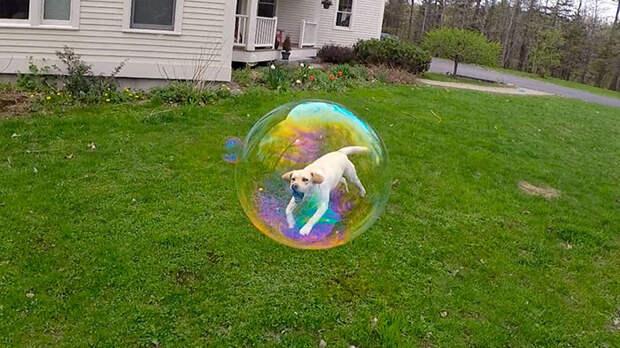 2. Собака в мыльном пузыре момент, фотография