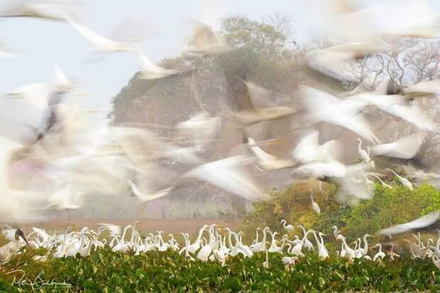 Симпатичные птички на снимках Петра Бамбусека