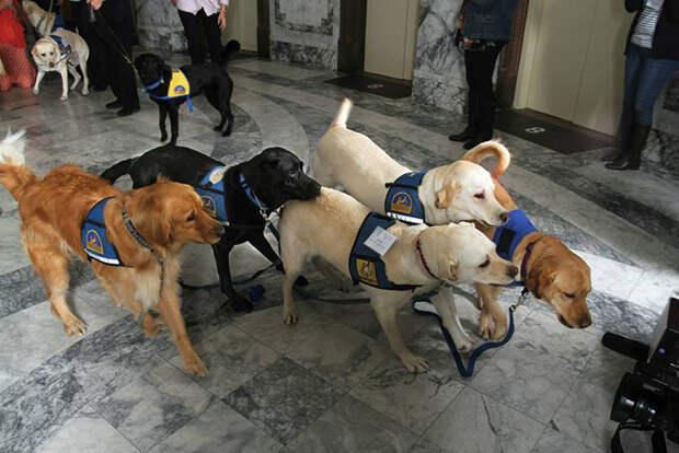 Собака в зале суда