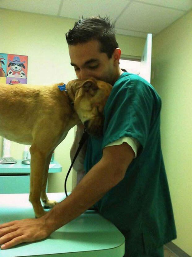 Благодарность ветеринары, животные