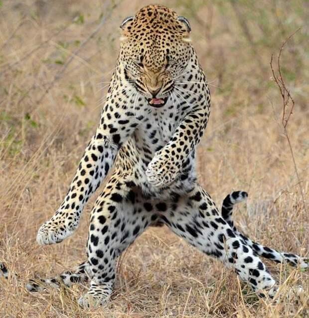 животные танцуют