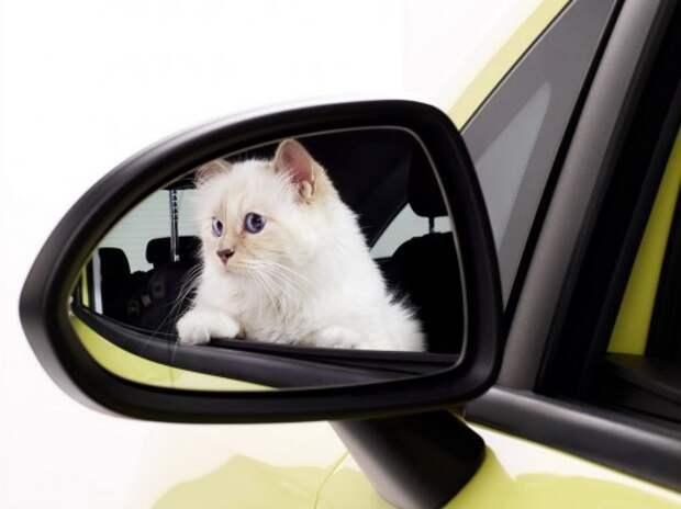 Новую Opel Corsa доверили рекламировать кошке