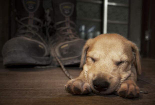 Следующие два фото задокументировали попытки первых шагов питомцы, расстояние, собака, эксперимент