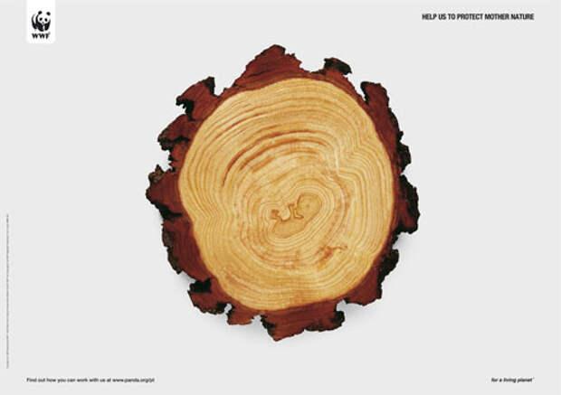 Сруб Древа жизни