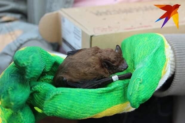 Жительница Воронежа Елена уже несколько лет занимается спасением летучих мышей.