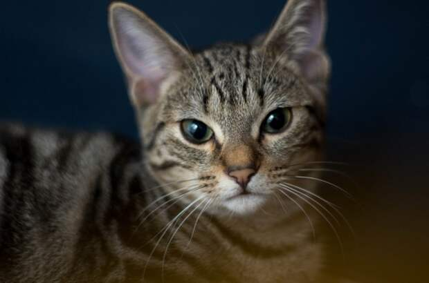 Самые красивые породы кошек